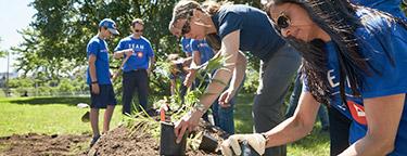 BMO team planting a garden