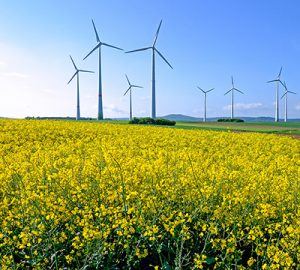 A field of yellow flowers with wind turbines in the background