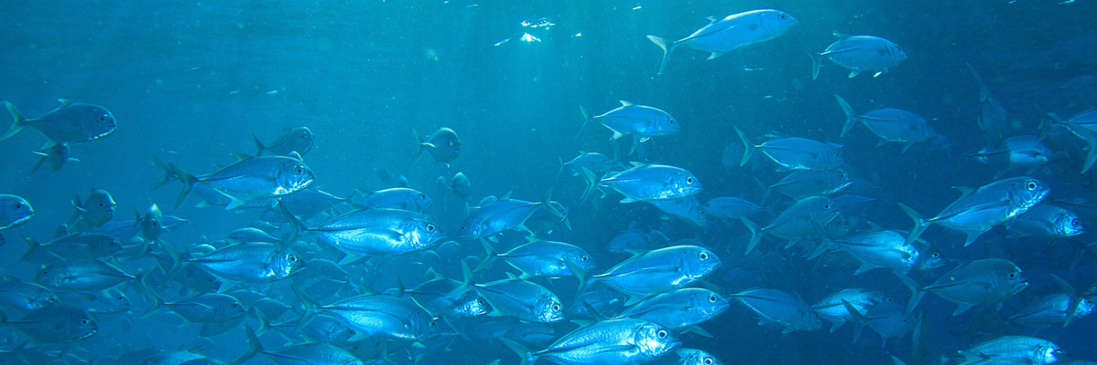 Swimming fish